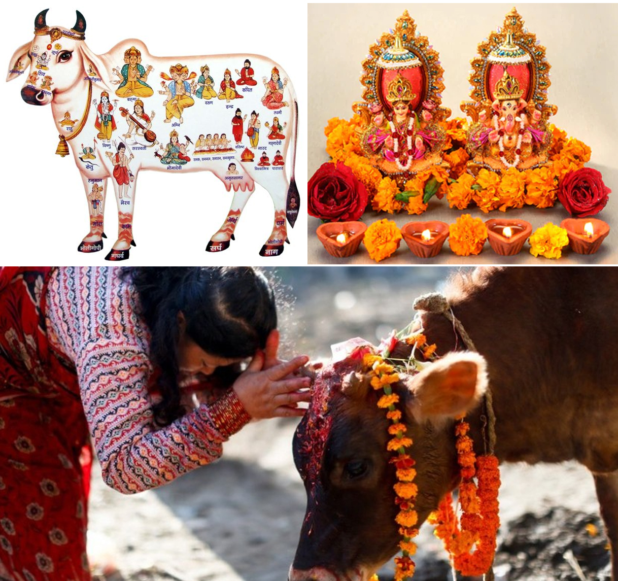 Gai Puja, Govardhan Puja and Mha Puja being observed